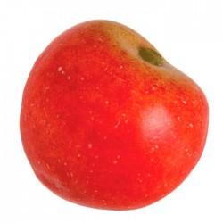 Ciruela roja