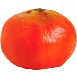 Mandarina lisa