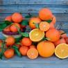 Naranja De Mesa Y Clementina