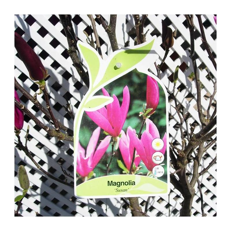 Magnolia susan - Abono para magnolios ...