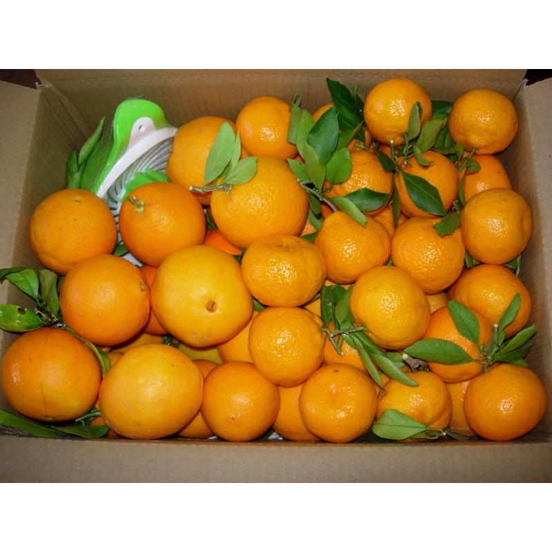 Naranjas de mesa, de zumo y mandarinas