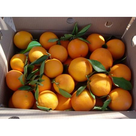 Naranjas de mesa, mandarinas y clementinas