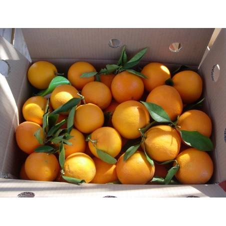 Naranjas de zumo, mandarinas y clementinas