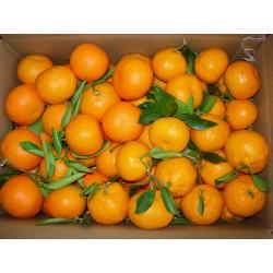Naranjas de mesa, de zumo y clementinas