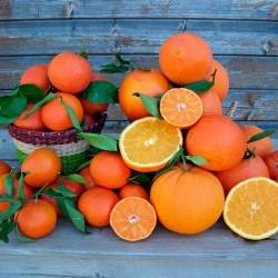 10 kg Clementinas + 10 kg Naranjas de mesa