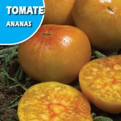 Semillas tomate ananas