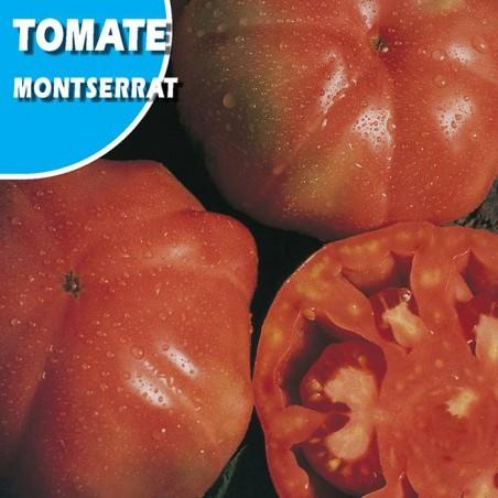 TOMATE MONSERRAT