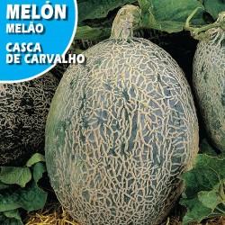 MELON CASCA DE CARVALHO