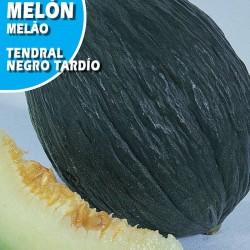 MELON TENDRAL NEGRO TARDIO