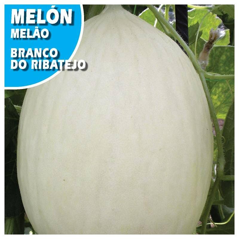 MELON BLANCO DO RIBATEJO