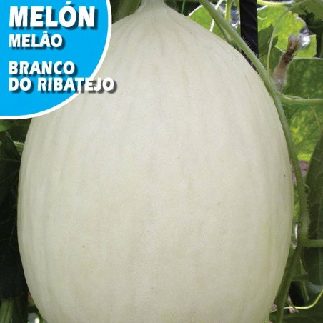 Semillas melón blanco do ribatejo