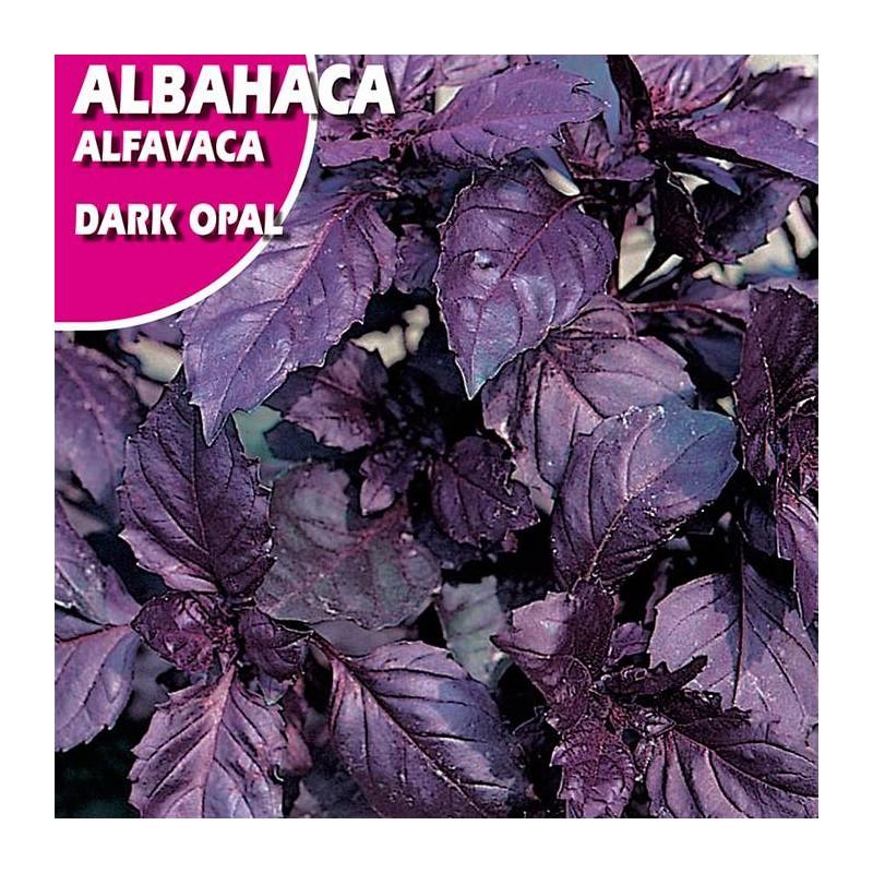 Semillas albahaca dark opal