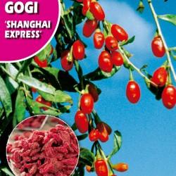 Semillas gogi shangai express
