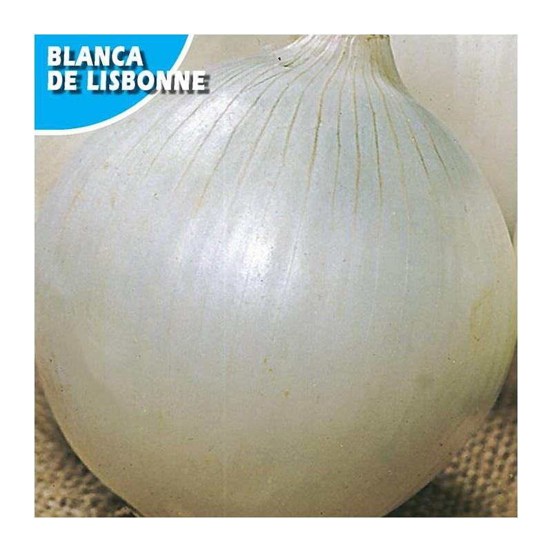 CEBOLLA BLANCA LISBONNE