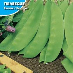 GUISANTE TIRABEQUE -COMETODO
