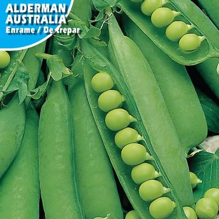 Guisante Alderman Australia