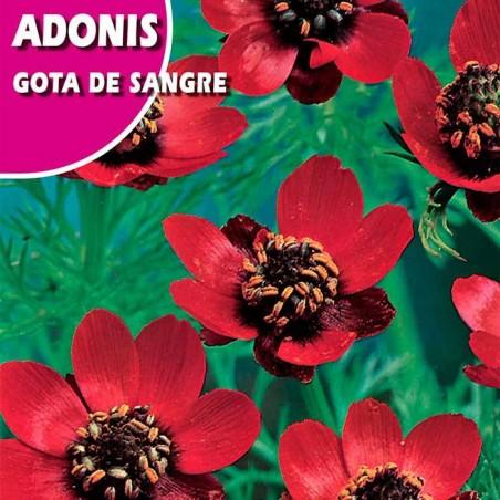 ADONIS GOTA DE SANGRE
