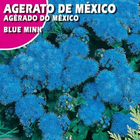 AGERATO DE MEXICO BLUE MINK
