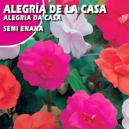 ALEGRIA DE LA CASA SEMI ENANA