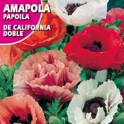 AMAPOLA DE CALIFORNIA DOBLE