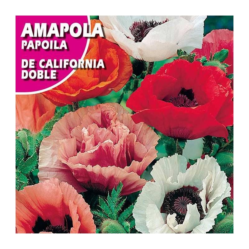 AMAPOLA DE CALIFORNIA DOBLE