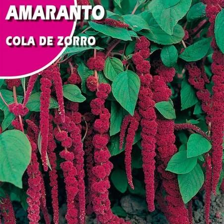 AMARANTO COLA DE GALLO