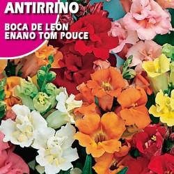 "ANTIRRINO BOCA DE LEON ENANO ""TOM POUCE"""