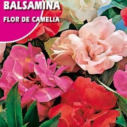 BALSAMINA FLOR DE CAMLIA