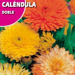 CALENDULA DOBLE