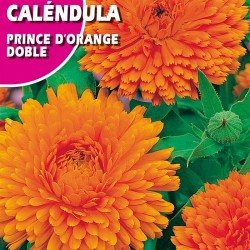 CALENDULA PRINCE D'ORANGE DOBLE