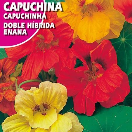 CAPUCHINA DOBLE HIBRIDA ENANA VARIADA