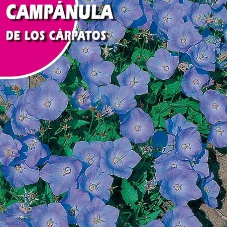 CAMPANULA DE LOS CARPATOS AZUL