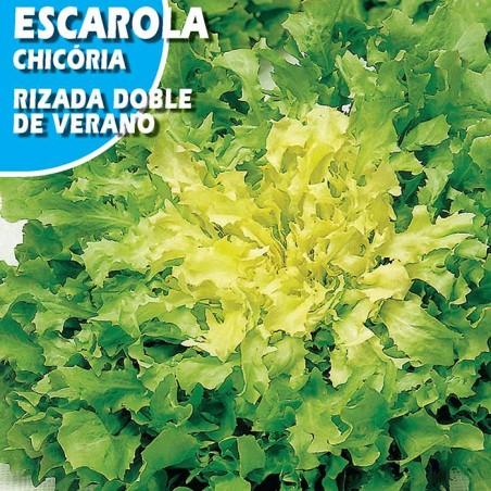 ESCAROLA RIZADA DOBLE DE VERANO