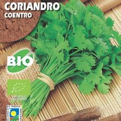 Semillas ecológicas coriandro