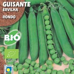 Guisante Rondo