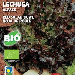 Lechuga Red Salad Bowl. Hoja de Roble