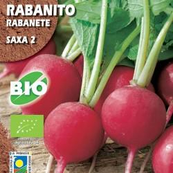 Rabanito Saxa 2