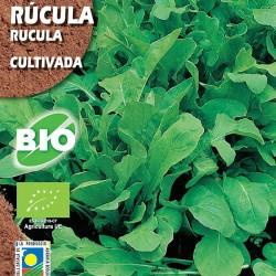 Semilla ecológica rúcula cultivada