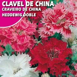 CLAVEL DE CHINA HEDDEWIG DOBLE VARIADO