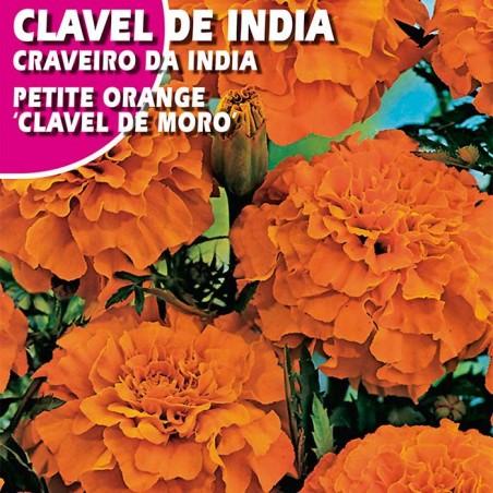 """CLAVEL DE INDIA PETITE ORANGE """"CLAVEL DE MORO"""""""