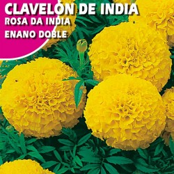 CLAVELON DE INDIA ENANO DOBLE AMARILLO
