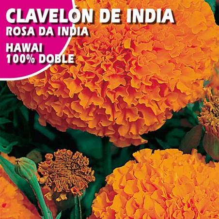 "CLAVELON DE INDIA ""HAWAII"" 100% DOBLE NARANJA"