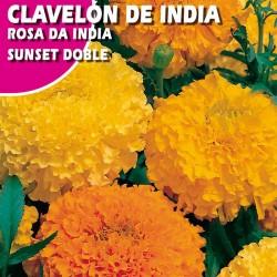 """CLAVELON DE INDIA """"SUNSET"""" DOBLE VARIADO"""