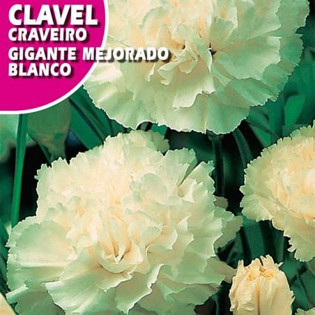 CLAVEL GIGANTE MEJORADO BLANCO