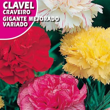 CLAVEL GIGANTE MEJORADO VARIADO