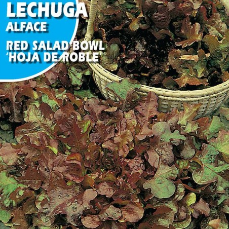"""Semillas lechuga red salad bowl """"hoja de roble"""""""