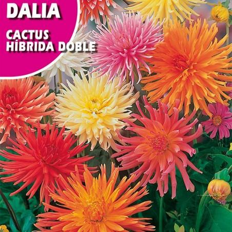Semillas dalia cactus hibrida doble variada