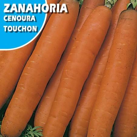 ZANAHORIA TOUCHON