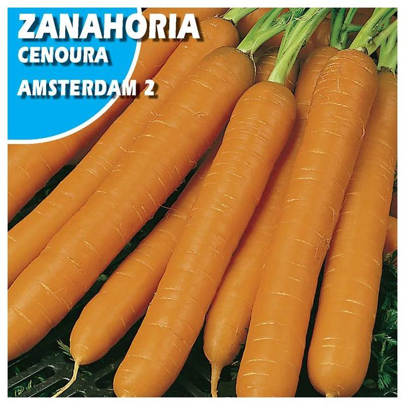 Zanahoria  Amsterdam 2
