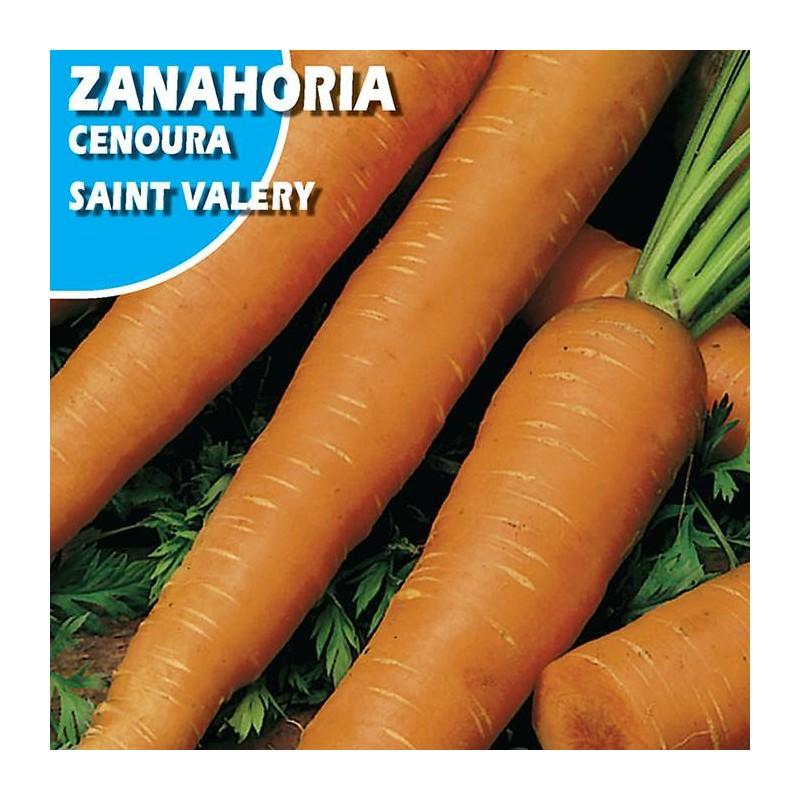 ZANAHORIA SANT VALERY